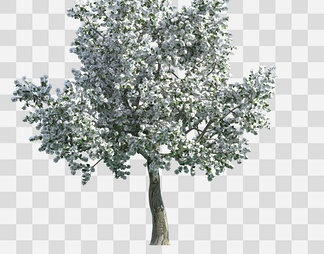 雪景树冬季树木
