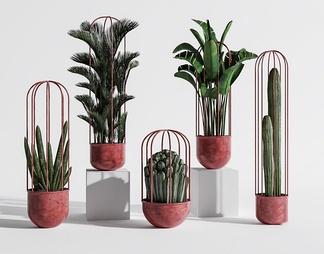现代室内植物盆景组合ID:351349821