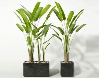现代流行室内装饰植物国外