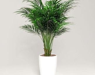 现代流行室内植物国外
