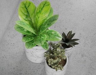 现代流行装饰植物国外