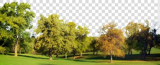 自然风景草坪树林贴图
