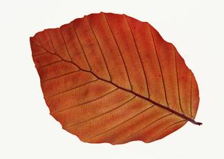 秋天树叶贴图