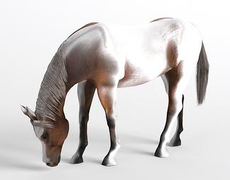 哺乳动物马