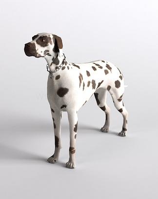 哺乳动物斑点狗