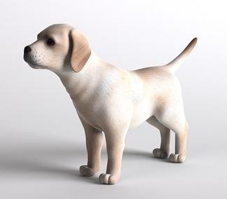 哺乳动物狗