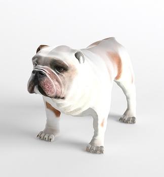 哺乳动物狗斗牛犬