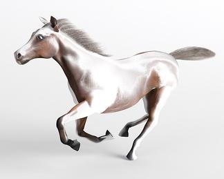 哺乳动物马奔跑