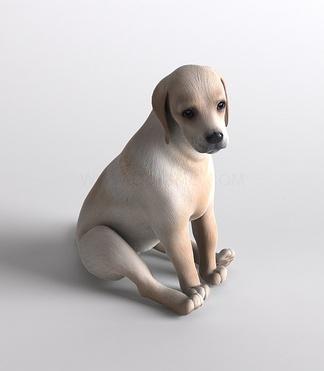 哺乳动物小狗