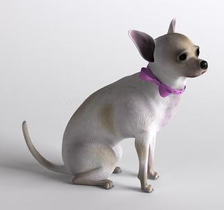 哺乳动物吉娃娃狗