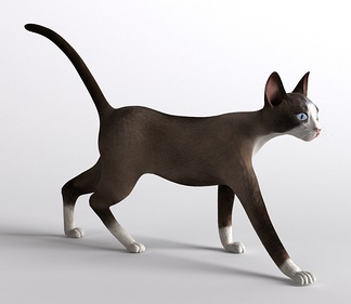 哺乳动物猫