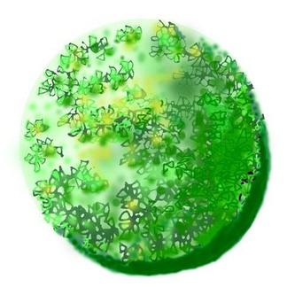 球形阔叶常绿