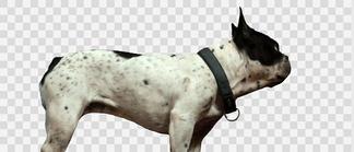 仰视斑点狗