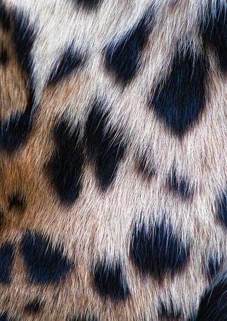 地毯集虎豹虎豹 (31)