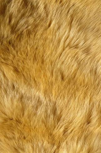 动物毛皮地毯