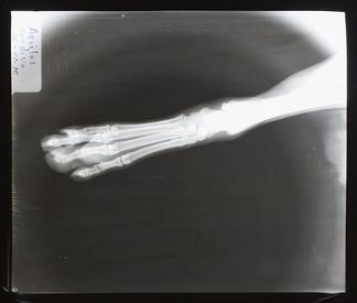 动物X射线
