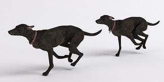 狗奔跑的狗