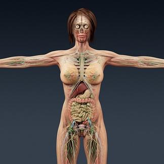 女人医学人体器官