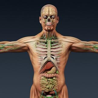 男人医学人体器官