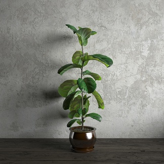室内盆栽植物