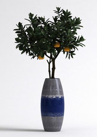 现代室内橘子树盆栽