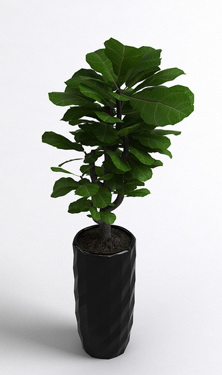 北欧现代植物