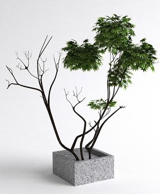 中式室外盆栽
