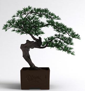 中式松树盆栽