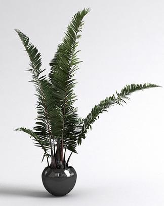 现代铁树盆栽