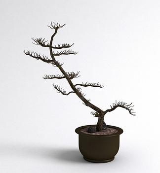 中式干支盆栽