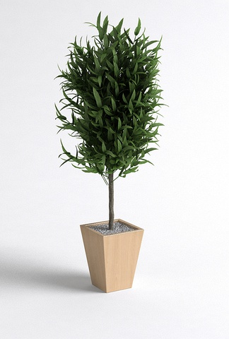 现代室内盆栽