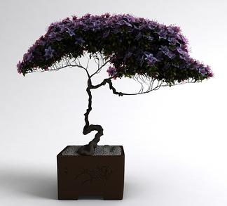 中式植物盆栽
