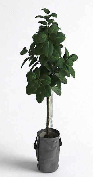 北欧盆栽树