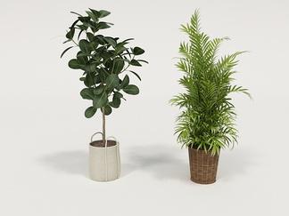 植物组合草编盆