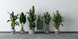 现代绿植盆栽组合3D模型