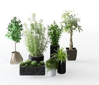 现代盆栽组合3D模型