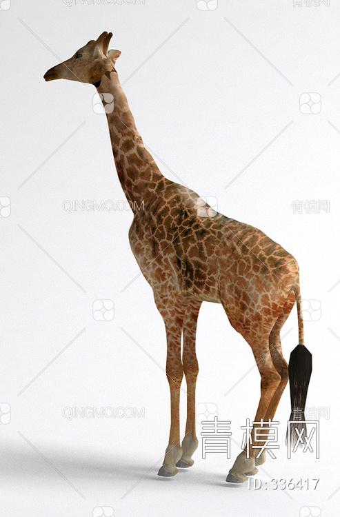 关键字: 大尺寸现代2014黄白jpg 哺乳动物3d模型 长颈鹿